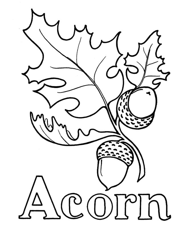 abc pre k coloring activity sheet a is for acorn - Pre K Coloring Sheets