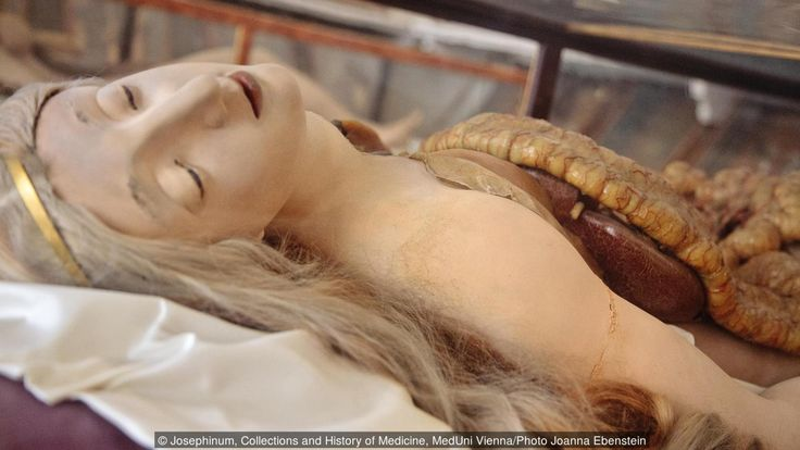 BBC - Culture - Why these anatomical models are not disgusting
