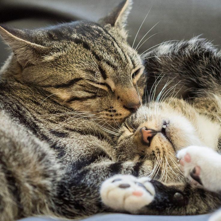любящие друг друга кошки картинки курортном посёлке мирный
