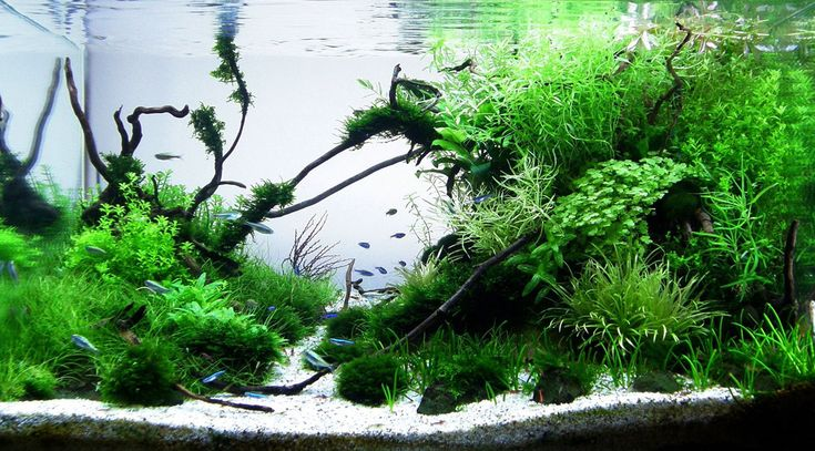 Aquascaping | ... Aquascaping - Custom Freshwater Aquariums from the Hungarian