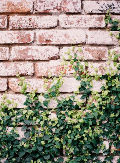 brick & ivy on the side wall leading up our side walk