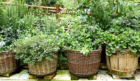 Herbs in baskets....basil, thyme, rosemary, mint and dill