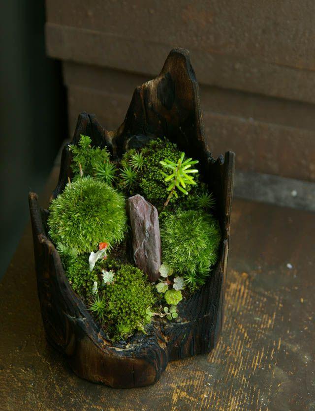 ~ So  Beautiful ! ~ にこブログ 新しい苔玉・盆栽・苔盆栽アップしました!~