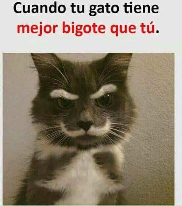 Imagenes de Humor #memes #chistes #chistesmalos #imagenesgraciosas #humor http://www.megamemeces.com/memeces/imagenes-de-humor-vs-videos-divertidos/