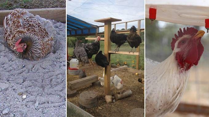 best 25 chicken houses ideas on pinterest chicken coops. Black Bedroom Furniture Sets. Home Design Ideas