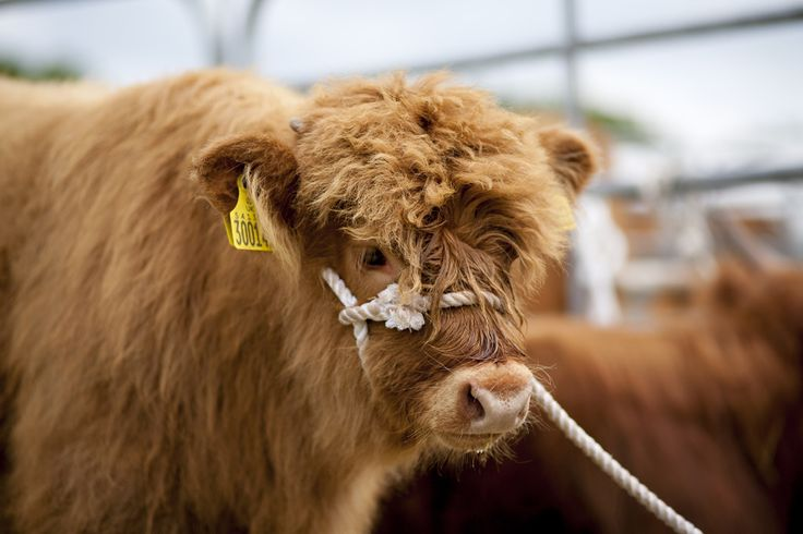 Baby coo copy