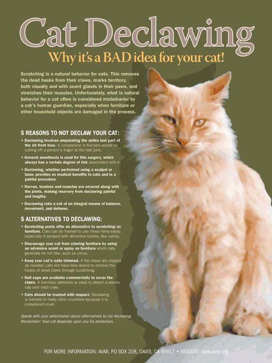 Cat Declawing Why It S A Bad Idea For Your Cat I Would Never In A Million Years Do This To My Cat Catbehaviorbiting Declawing Cats Cat Care Cat Behavior