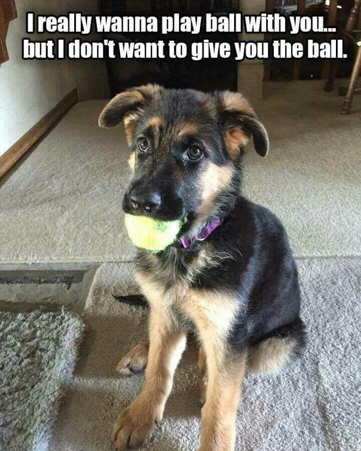 A Dog's Dilemma...