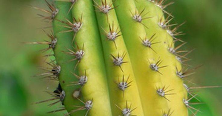 Acerca de los tarrarios de cactus. Un terrario de cactus es su propio mini-ecosistema. Los que viven en el norte, donde los cactus no pueden cultivarse afuera, pueden traer un poco de desierto a sus propios hogares. Puedes agregar decoraciones a tus terrarios de cactus como una pequeña roca y piedras e incluso un pequeño lagarto de plástico para darle un aspecto desértico auténtico.
