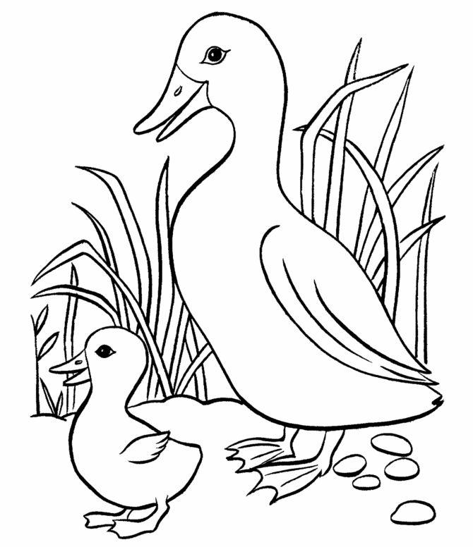 gambar belajar mewarnai untuk anak anak gambar bebek