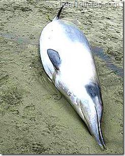 Científicos descubrieron misteriosa especie de ballena - http://www.leanoticias.com/2012/11/07/cientificos-descubrieron-misteriosa-especie-de-ballena/