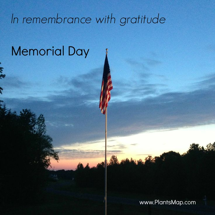 39 best images about Memorial Day on Pinterest | Red white ... | 736 x 736 jpeg 61kB