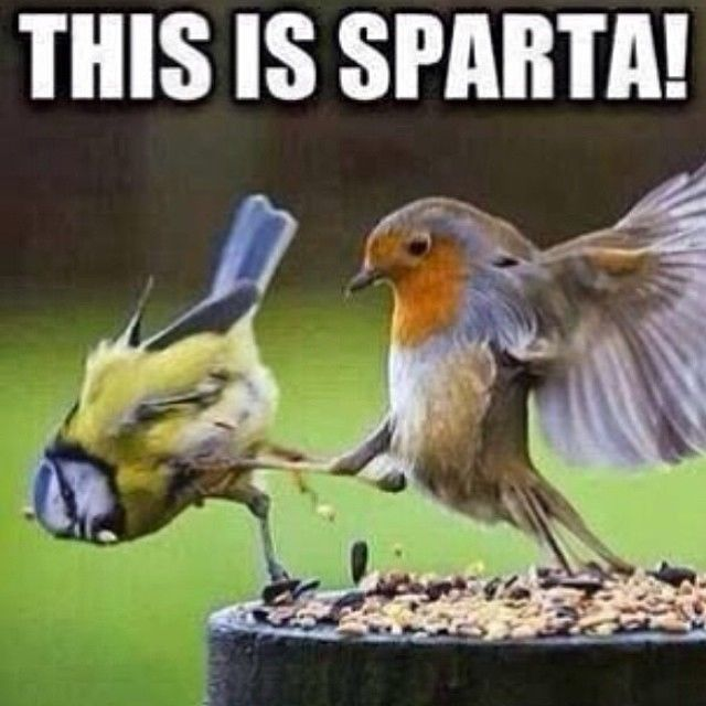 This is Sparta funny quotes quote lol funny quotes humor instagram instagram…