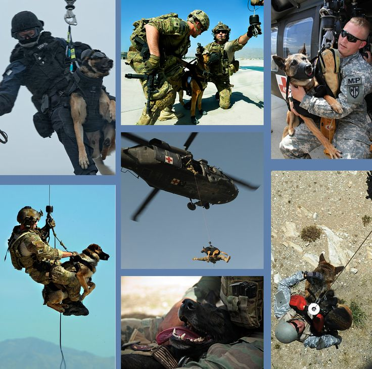 Military Working Dogs 101 - Chapter 2(i): Specialized Training - Hoist  Hoist training is designed to acclimate the dog and handler to the K9 Medevac (medical evacuation) procedure and the aerial entry process.