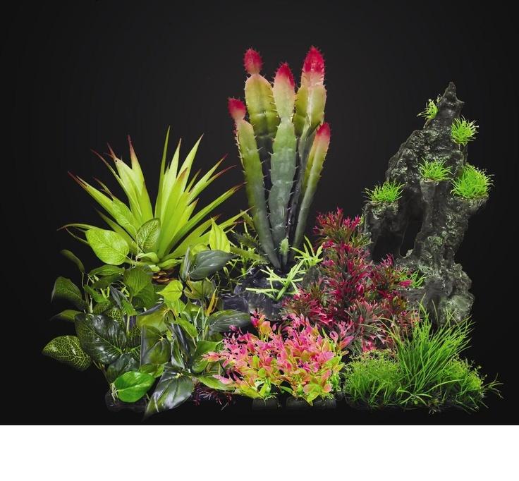 Plants for an aquarium with colors