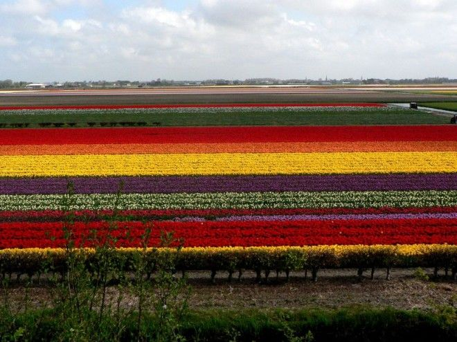Bulbfields, South Holland, The Netherlands | 1,000,000 Places