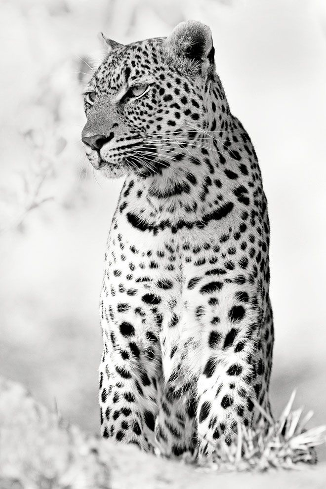30 Mind-Blowing Black and White Photography examples and Tips for Beginners | Read full article: http://webneel.com/30-mind-blowing-black-and-white-photography-examples-and-tips-beginners | more http://webneel.com/black-and-white | Follow us www.pinterest.com/webneel