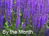 What to do each month in your garden and landscape - Dallas County Master Gardener Association
