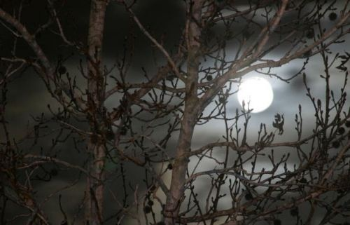 Mother Moon, so full and bright  Hear my plea upon this night.  Your fertile power lend this spell;  Bring to fruition,  Blessed Be Well.