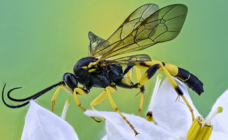 Best Wasp Attractant/bait and Trap: #wasp #attractant #bait SEARCH TERMS: best homemade wasp attractant best wasp trap attractant best red wasp attractant best wasp attractant best attractant for wasp traps what is the best wasp attractant