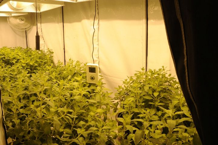 It is vital that you select the right LED lighting for your indoor garden. Few popular indoor growing light include LEDs, HPS, fluorescent lights, HID, and bulbs. Each of the growing lighting comes with their own pros and cons.