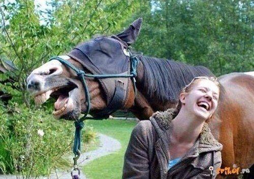Animales Graciosos - Funny Animals