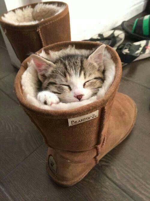 quentinho e confortável dormindo na bota