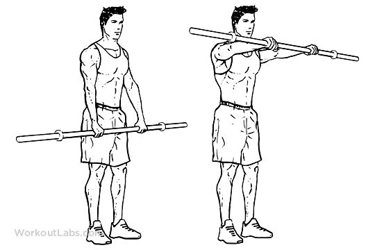 stability ball dumbbell back biceps circuit workout