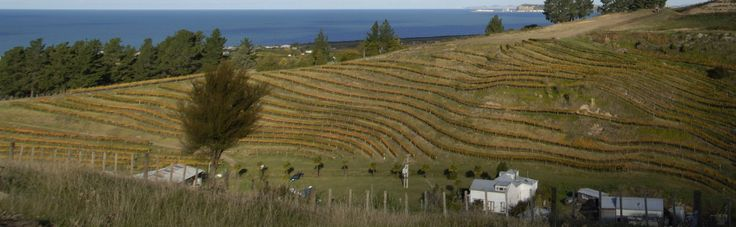 Esk Valley New Zealand Wines - one of the most beautiful wineries in the country!