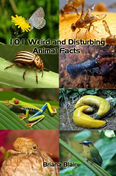 101 Weird And Disturbing animal Facts By Briana Blair - Nature Ebook - BrianaDragon Creations