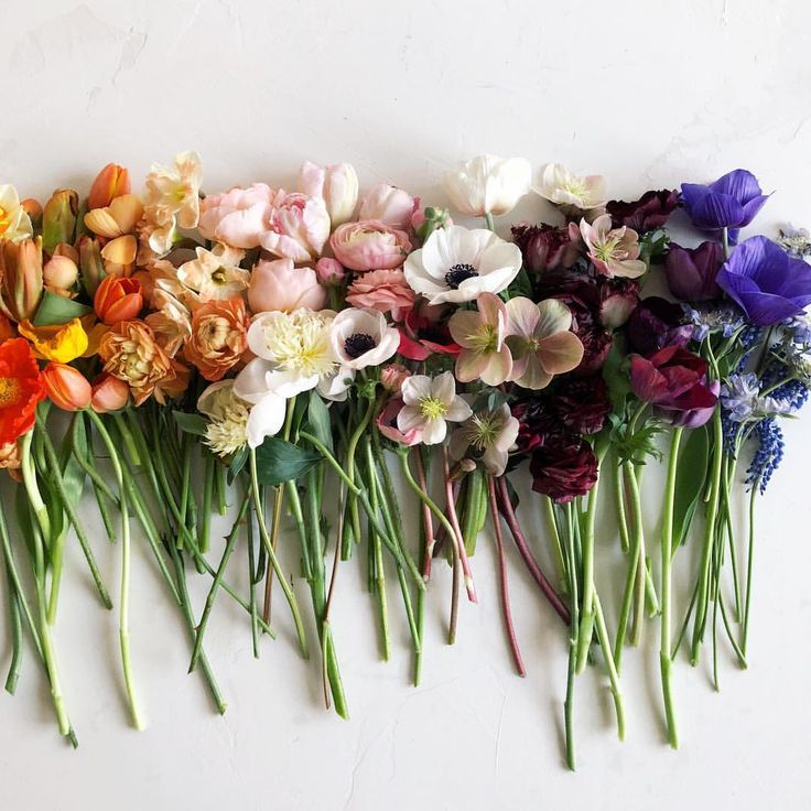 Ombré blooms