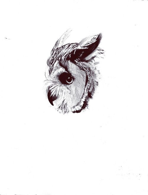 Owl tattoo drawing sketch black and white art