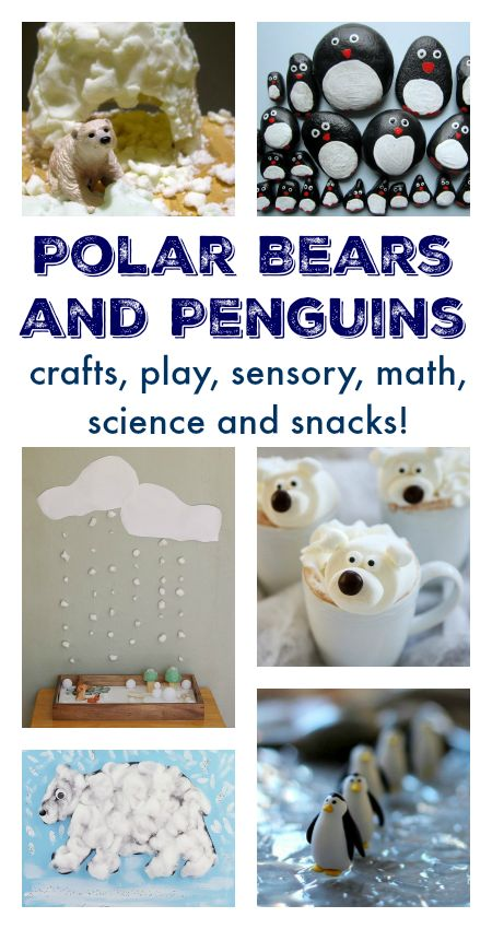 lesson 16 activity polar bears and penguins meet