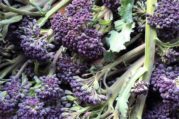 Brotes de coliflor púrpura asada al limón para acompañamiento