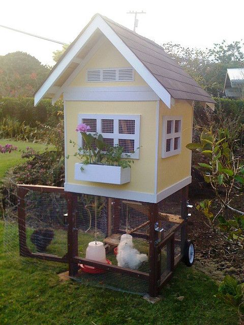 Chicken coop - do you think George would notice if I got a couple of laying hens for the back yard? I 'spose we'd need a rooster, too.