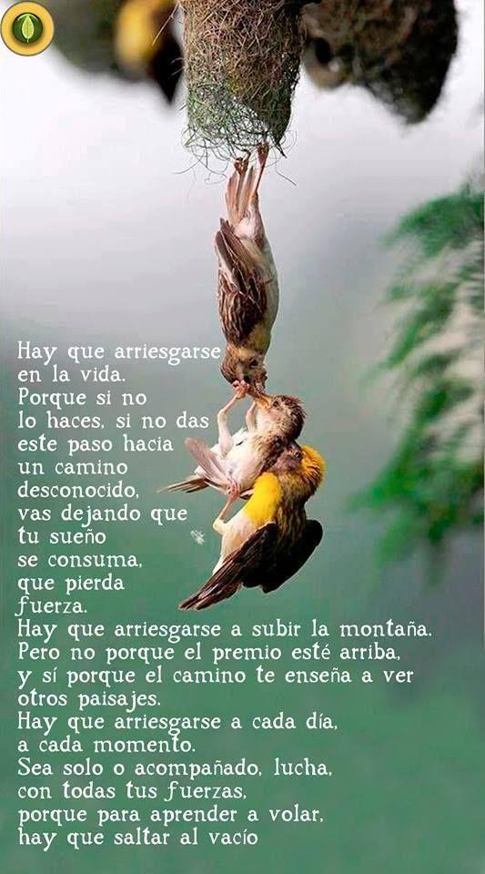 Angie XXX