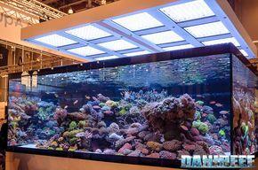 http://www.danireef.com/wp-content/uploads/2016/06/2016_05-Interzoo-Norimberga-De-Jong-MarineLife-Layout-aquario-marino-01.jpg