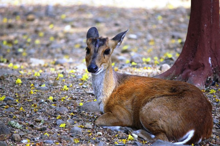 #Sanjay_Gandhi_National_Park, #Mumbai – An Abode for the Richest Fauna of the City - I decided to pay a visit to the Sanjay Gandhi National Park in Mumbai which is located in #Borivali. Borivali is one of the suburbs of the city where many rich and affluent people reside. The major attractions of the park are tiger and lion safari. People flock around the national park in thousands of numbers and the area remains crowded always.