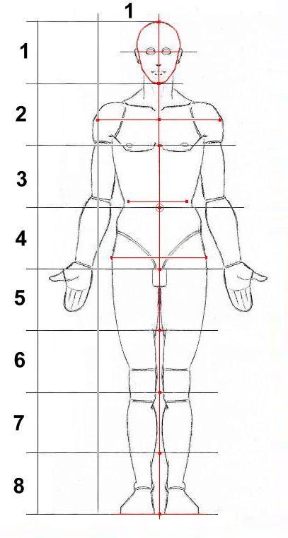 disegno anatomia corpo umano - Cerca con Google