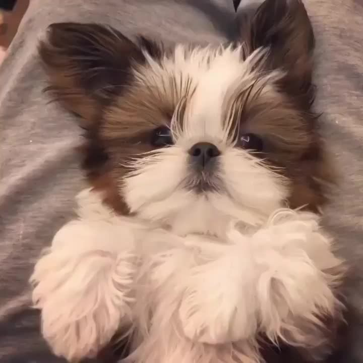How Do Cute Dogs Bite.. Here It Is! https://imgur.com/gallery/Bb69V #cutedogs