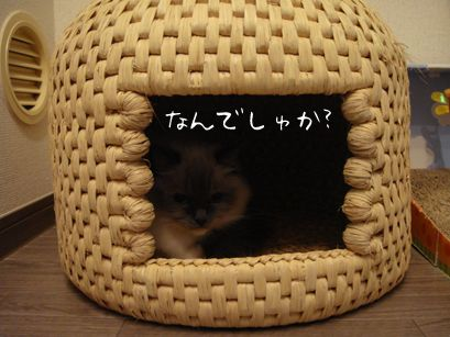 """neko chigura"" (cat house) - a traditional Japanese craft. I'm definitely going to crochet something like this for Mochi!"