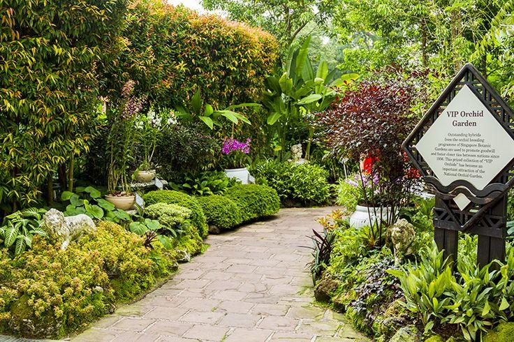 АБВ-мобиль: Ботанические сады Сингапура Singapore Botanic Gardens – впечатления и отзывы туристов с красочными фотографиями