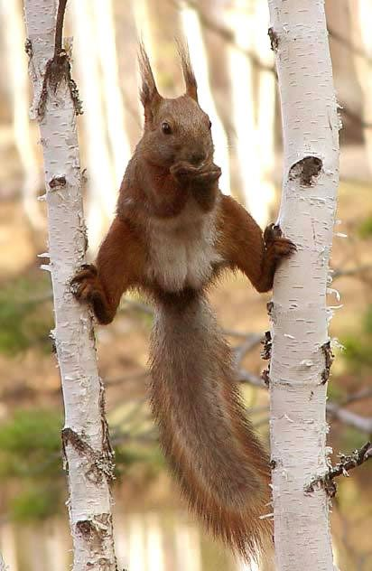 Funny Animals - Pictures, Greetings, Images for Facebook and Orkut - Page 7