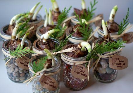 Gift idea paperwhites in mini mason jars