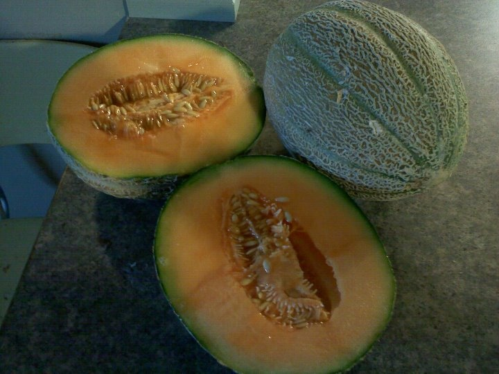 Melons grown in my compost pile from store bought melons and I just threw the seeds and rinds in pile and let them grow.  Very sweet and juicy.Neen Gardens, Stores Bought, Bought Melon, Compost Pile, Gardens Stuff, Melon Grown