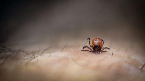 Boxes in dead scientist's garage bring back a Lyme disease mystery - Lyme disease tick