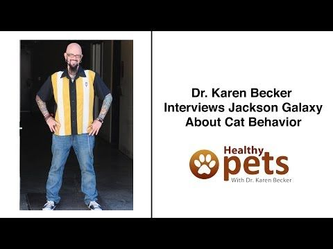 17 best ideas about jackson galaxy on pinterest man love for Jackson galaxy cat mojo