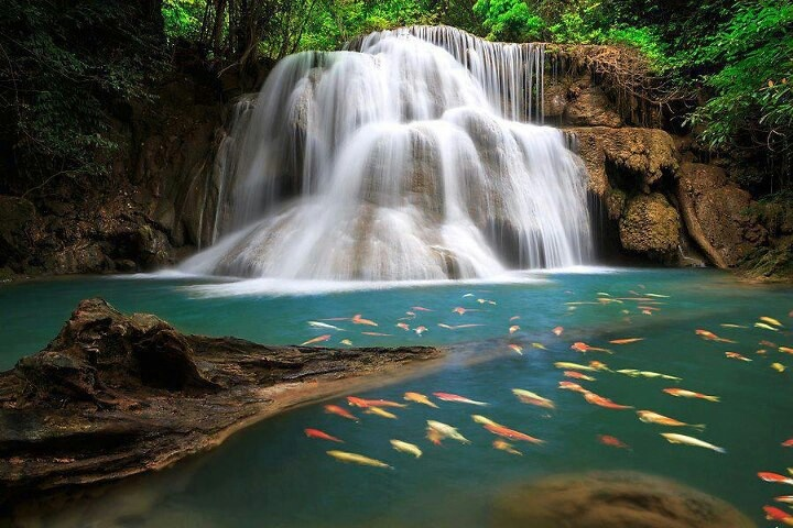 Its Nice Waterfall & Fishes