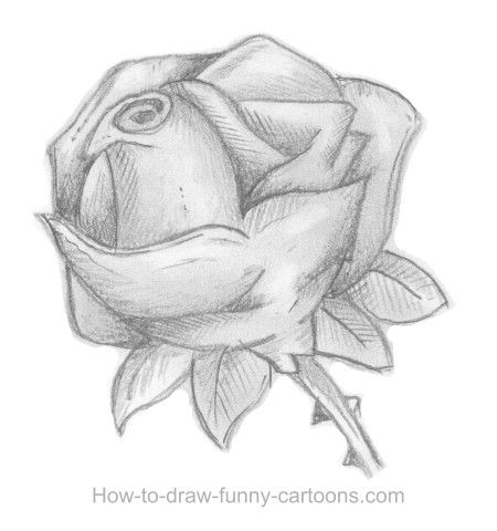 How to sketch a rose, part 8