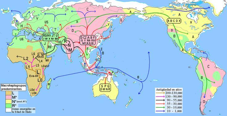 """Rebecca Cann, al rescate de la """"Eva mitocondrial"""" en el túnel del tiempo Migraciones humanas según los datos del ADN mitocondrial."""